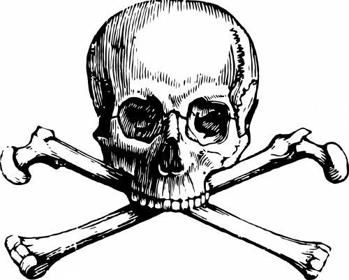 500x401 Free Photos Skeleton Bones Skull Search, Download