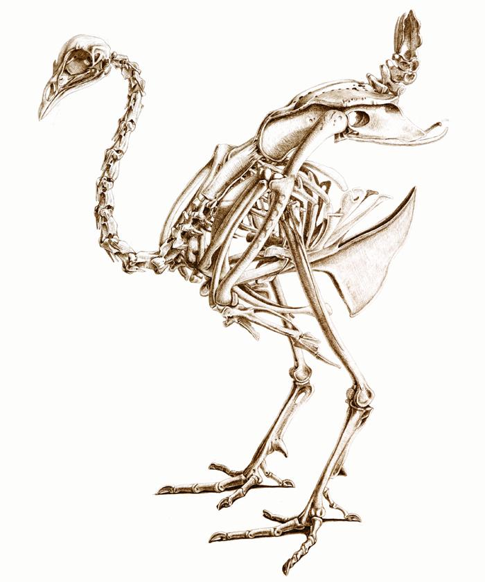 700x840 Painting Animal Skeletons, Animal