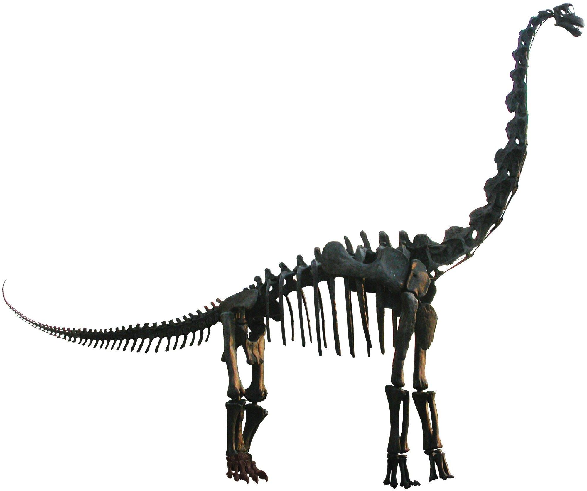 2000x1673 Brachiosaurus