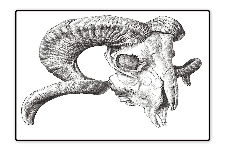 1500x1000 Animal Skull Drawing Artists Charcoal Line Art Iydunetwork