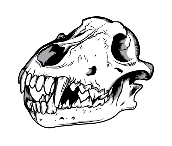 600x509 Sapta Design How To Create A Three Color Wolf Skull In Illustrator