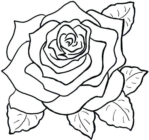 500x473 Simple Roses Drawings Flowers Drawing Reference Floral Tattoo