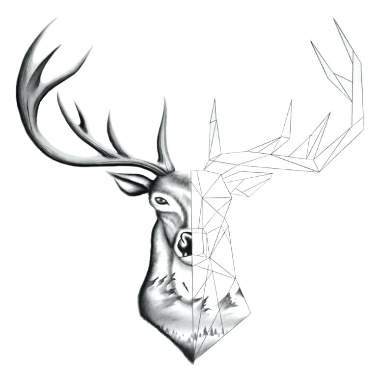 770x770 Drawing Of Dear Deer Drawing Step Drawing Stag Heads