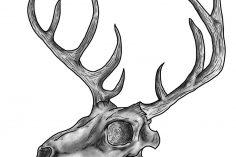 236x157 Charcoal Drawing Animal Skull Sketches Art Tumblr Pencil Step