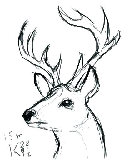 400x517 draw a deer deer drawing step easy to draw deer skull