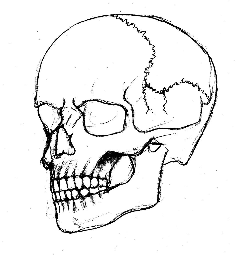 954x1024 Skull Drawing Outline For Free Download