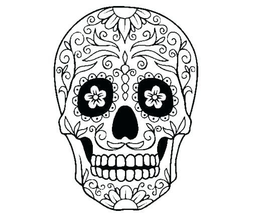 536x430 Skull Outlines Skull Outlines Skull Outline Vector