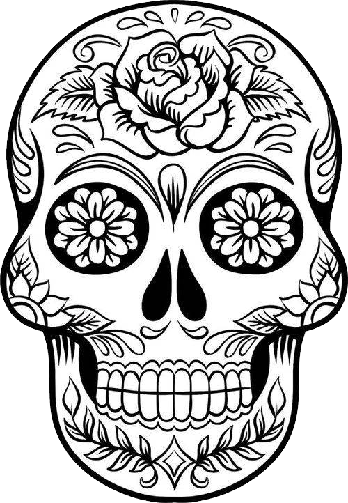 500x722 Skull Drawing Png Images In Collection