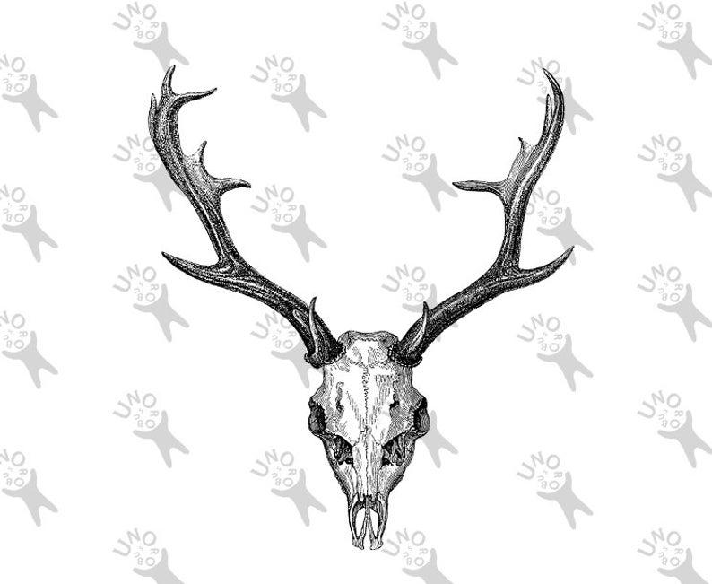 794x651 Deer Skull Horns Vintage Deer Stag Antlers Image Instant Etsy