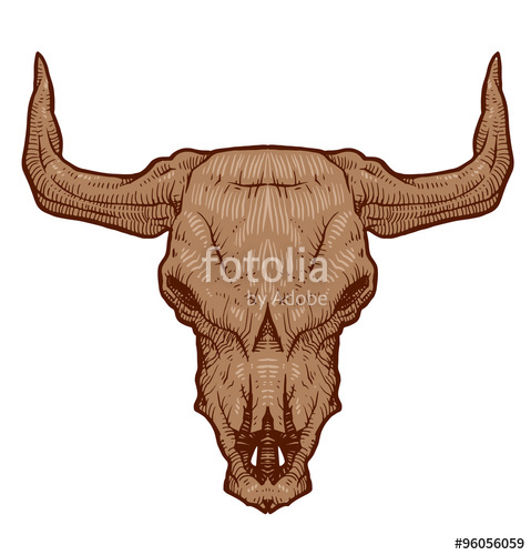 479x500 Vector Drawing Animal's Skull, Bull Cartoon Image Of Drawing