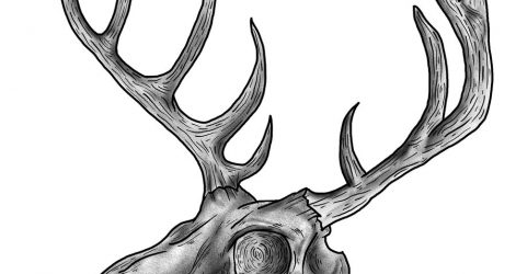 471x250 Animal Skull Drawing Simple Pencil Easy With Horns Dead Iydunetwork