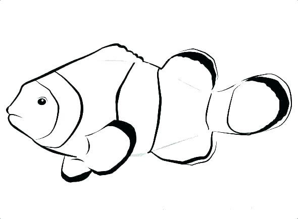 590x434 fish templates free premium templates fish coloring