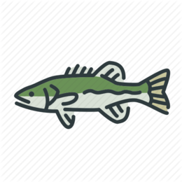 260x260 download smallmouth bass clipart smallmouth bass fly fishing