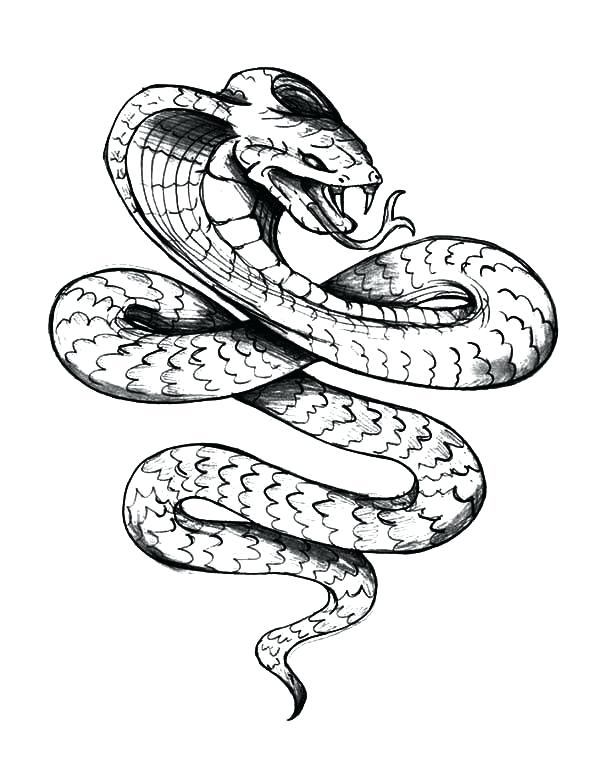 600x759 how to draw a cobra cobra snake drawing draw king cobra snake