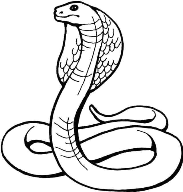 640x673 how to draw a cobra how to draw a king cobra step cobra draw wire