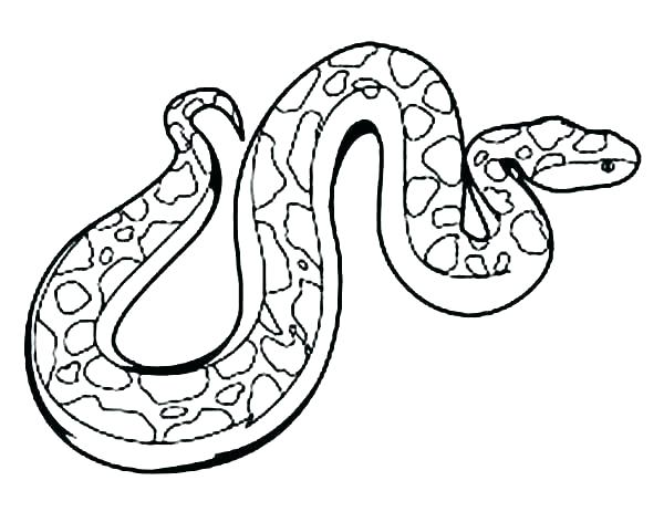 600x463 how to draw a anaconda snake