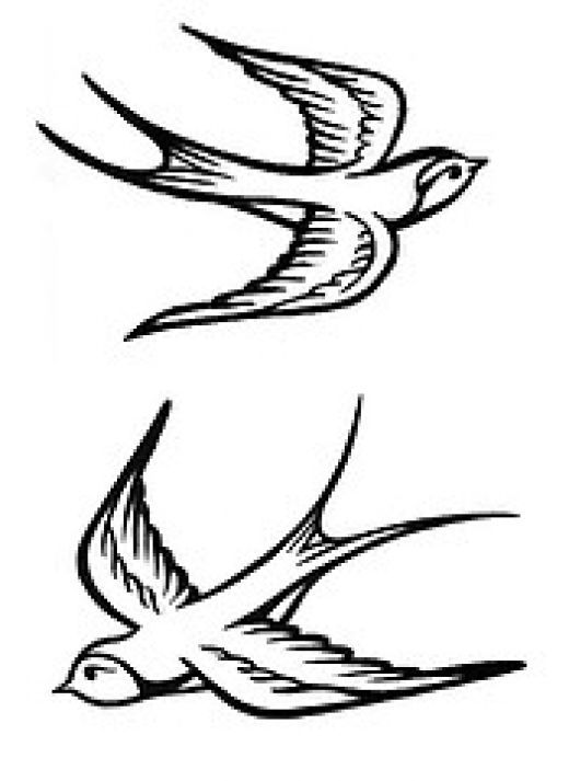 Sparrow Drawing Tattoo