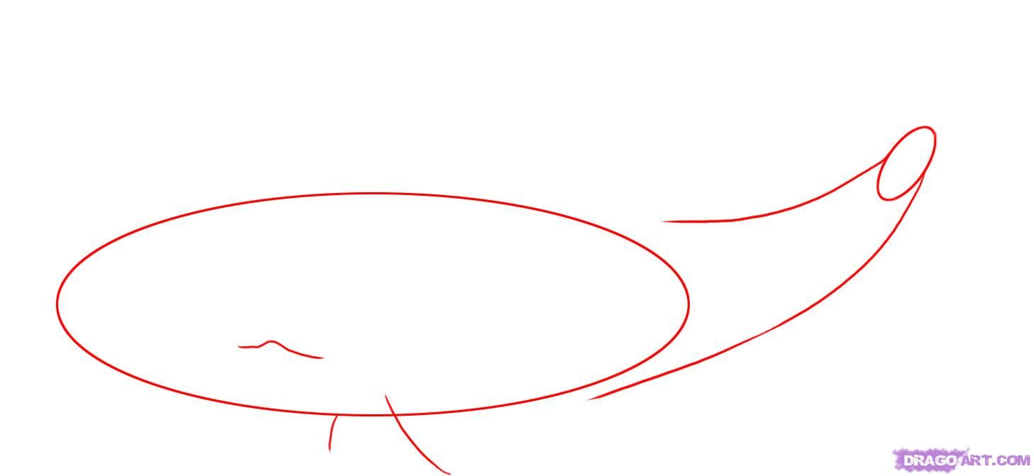 1457x671 how to draw a sperm whale step art whale drawing, whale