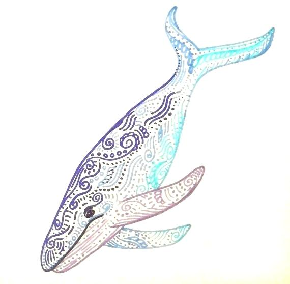 570x558 whale drawing humpback whale whale drawing step