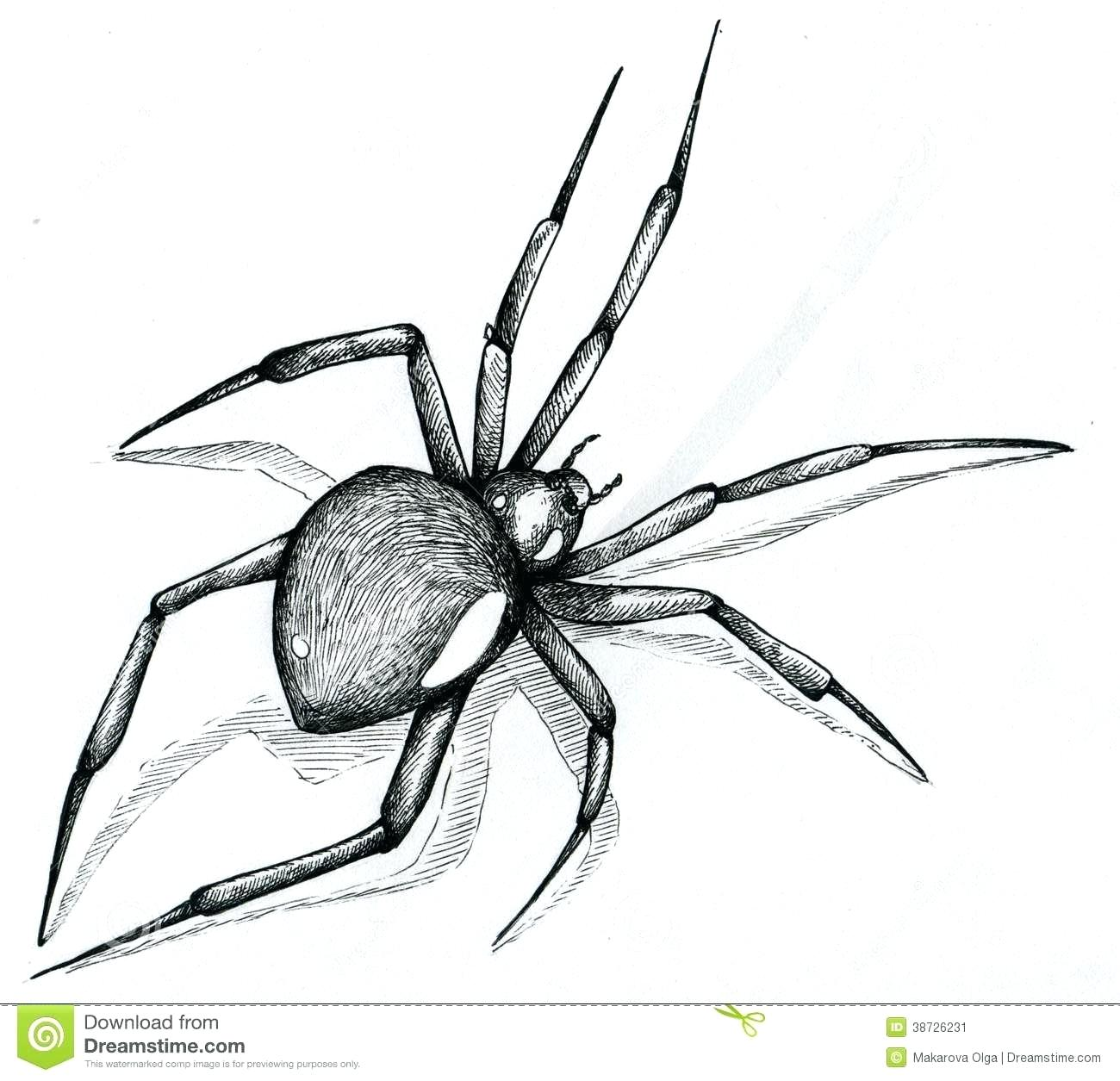1300x1255 drawing a spider spider web cartoon drawing how to draw a spider