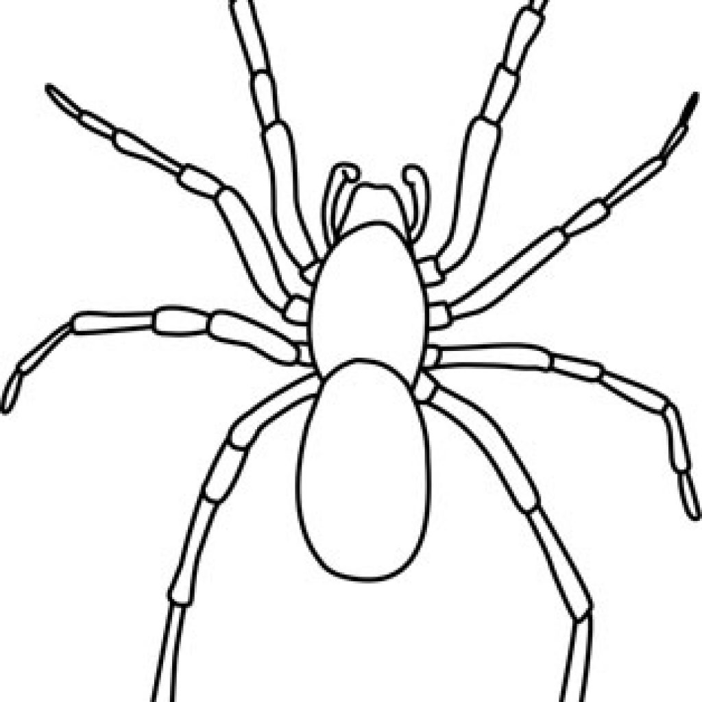 spider drawing email 22