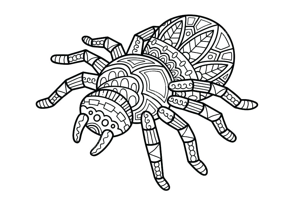 1023x682 spider outline spider on web icon outline spider on web vector