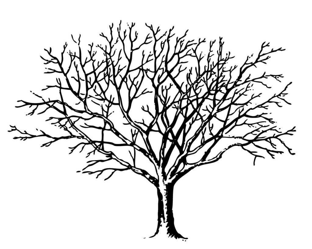 1024x817 spooky tree clipart coloring pages clipartfest spooky tree