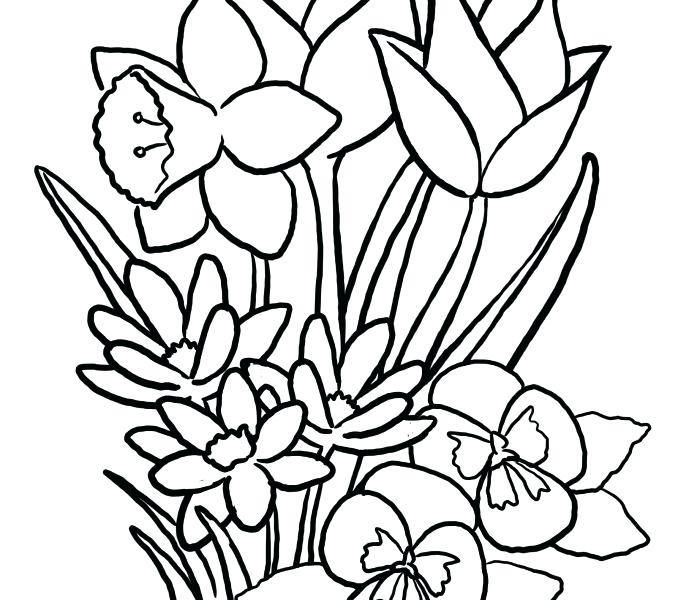 678x600 spring flower drawing for personal use spring flowers coloring