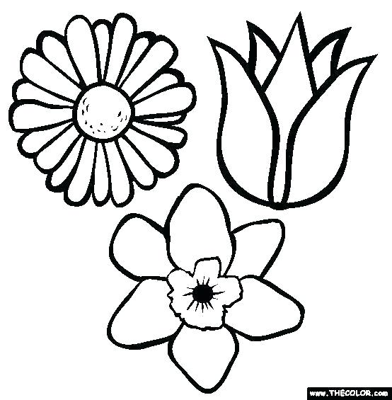 554x565 spring flowers printable coloring pages spring flower color pages