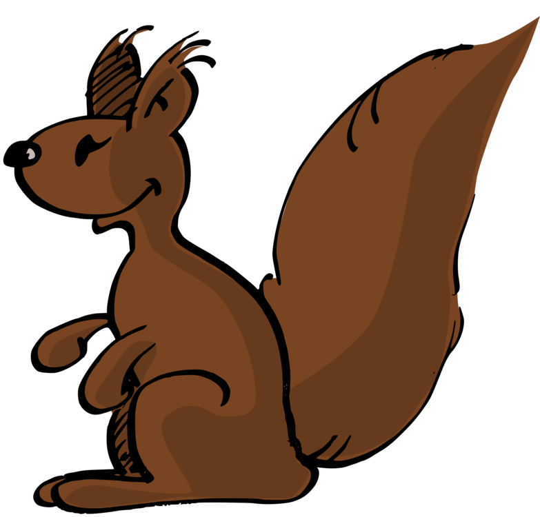 783x750 red squirrel eastern gray squirrel cartoon tree squirrel drawing
