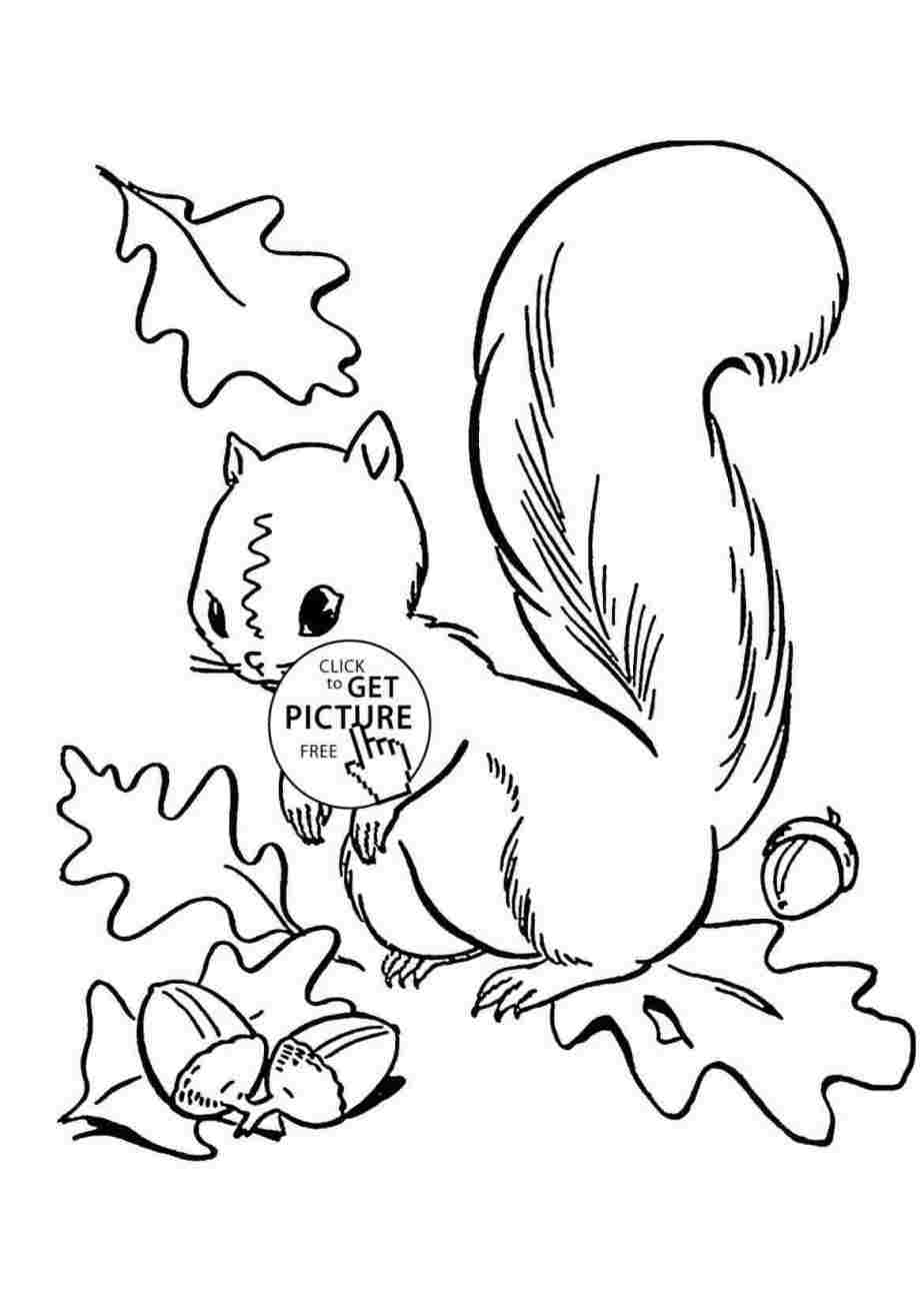Squirrel Drawing Easy | Free download on ClipArtMag