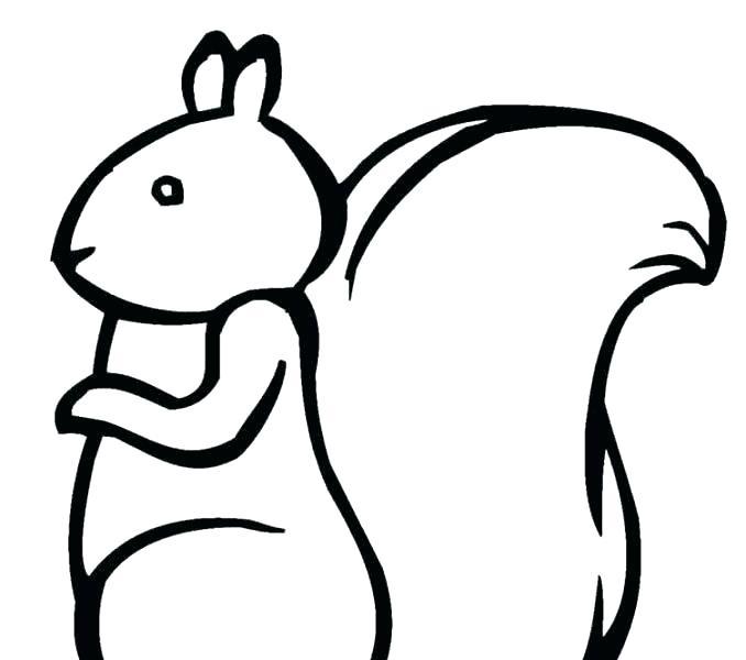 678x600 squirrel coloring pages squirrel coloring pages fresh squirrel