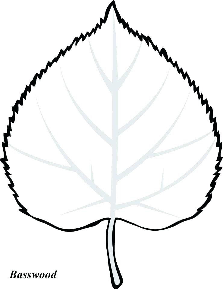 740x961 fall leaf drawing leaf outline fall leaves fall leaf cartoon