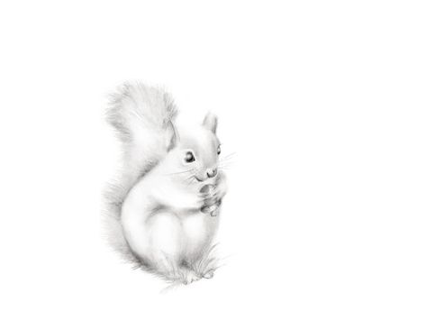 473x365 Squirrel Nursery Print, Baby Animal Art, Woodland Nursery, Gender