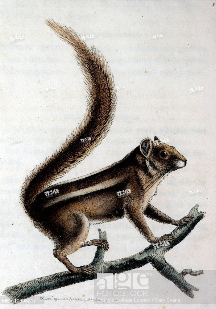 700x1000 A Pencil Tailed Squirrel Standing On A Branch Source