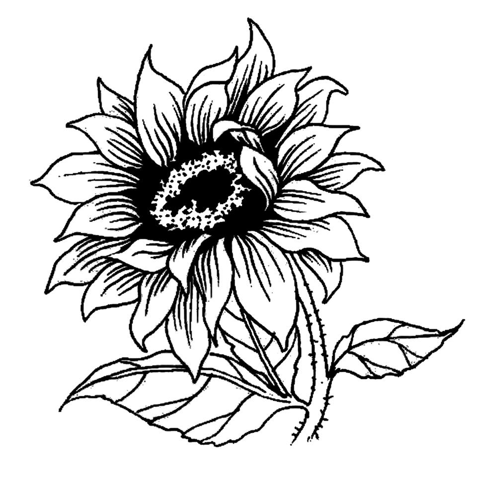 960x960 small sunflower drawing and small sunflower drawing sunflower
