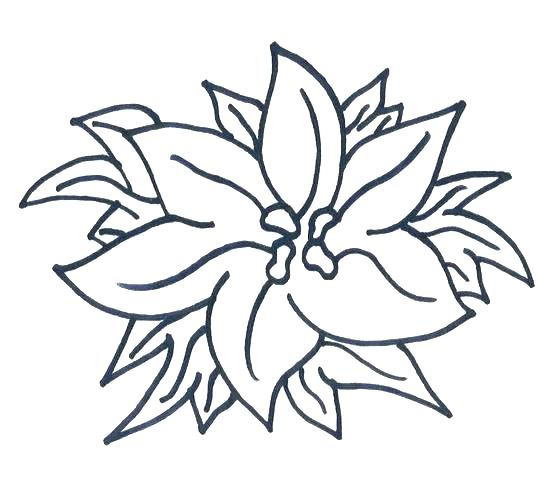 550x502 vector ornate poinsettia or star green leaves and vector ornate