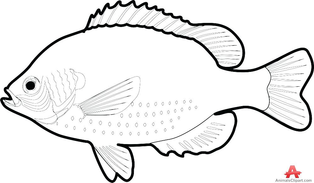 999x583 Outline Drawing Of Fish At Free For Personal Use Starfish Clipart