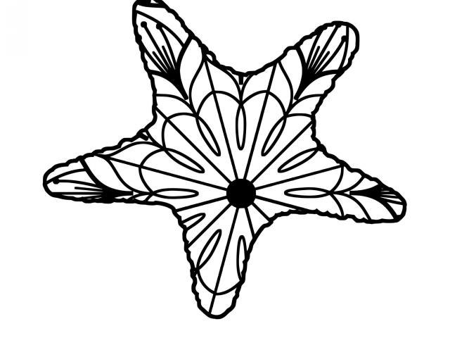 640x480 Starfish Clip Art
