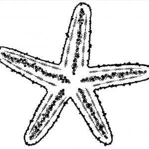 300x300 Starfish Drawing Inspirationa Template Starfish Easy Drawing At S