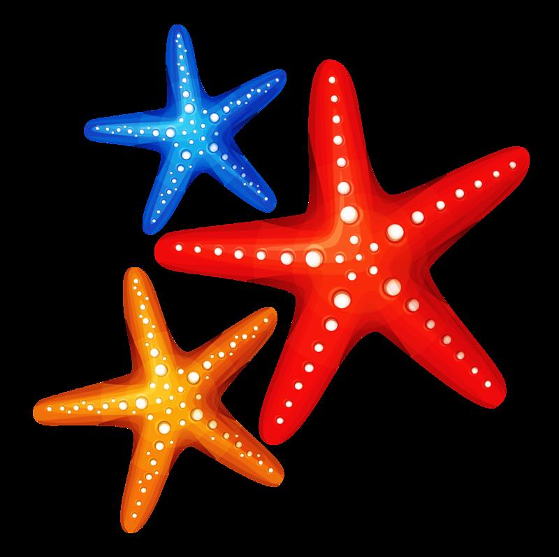 800x796 Drawing Starfish Blue Cartoon Transparent Png Clipart Free
