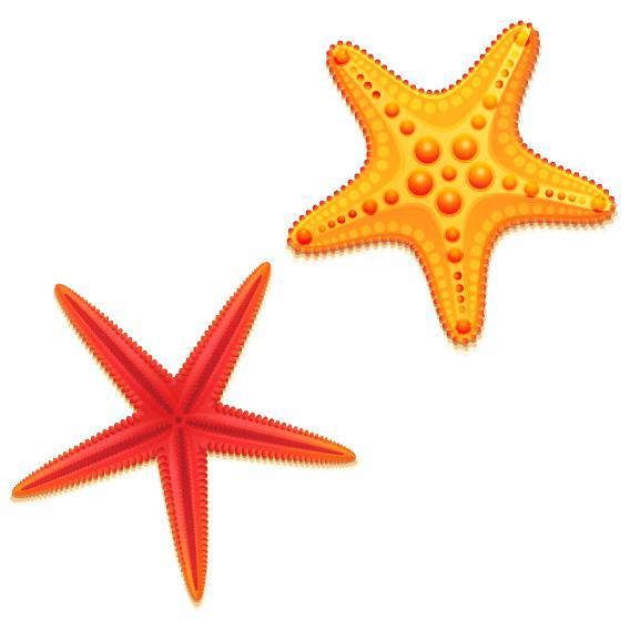 568x568 Starfish Vector Godshelters
