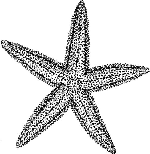 487x500 round badge style keyring line drawing starfish