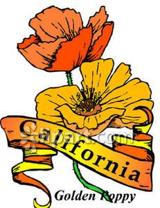 231x300 California State Flower
