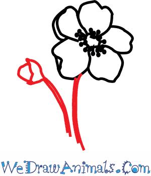 300x350 How To Draw A Poppy Flower