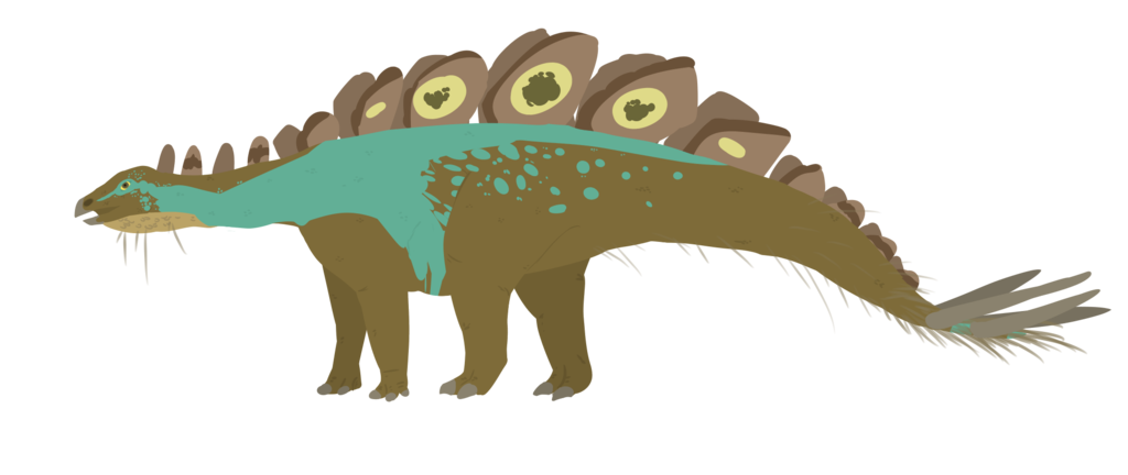1024x432 Collection Of Free Stegosaurus Drawing Feather Download On Ui Ex