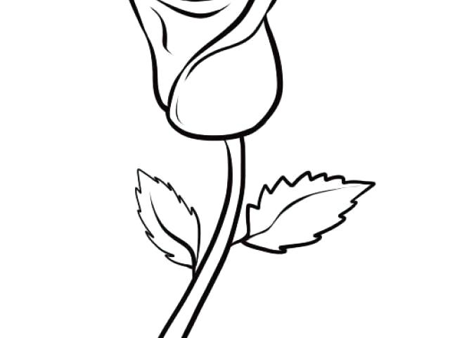 640x480 Simple Rose Drawing How To Draw Flowers Learn How To Draw A Rose