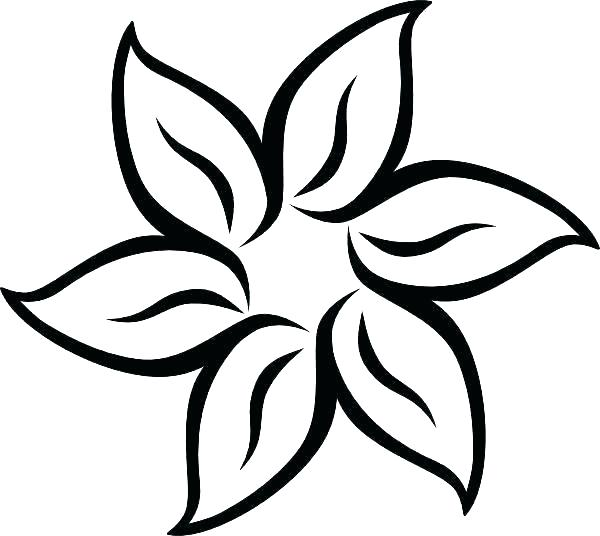 600x536 How To Draw A Hawaiian Flower Step
