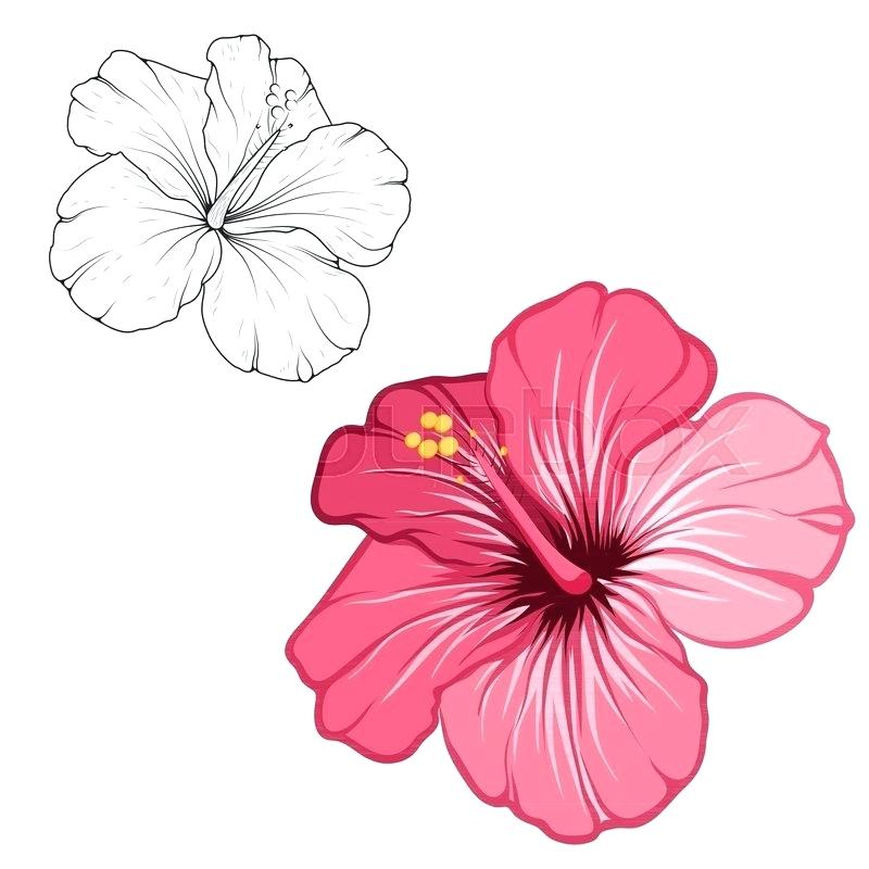 800x800 How To Draw Hibiscus Flowers Step
