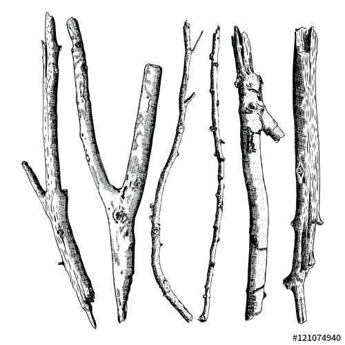 500x500 Drawing Of A Branch